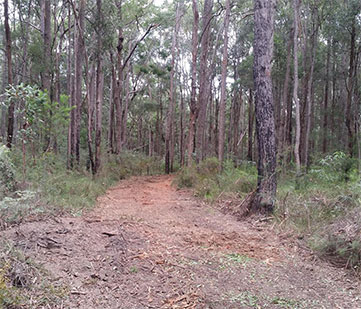 Selective land clearing